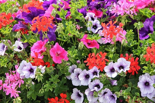 colorful-flowers-4355583_1920